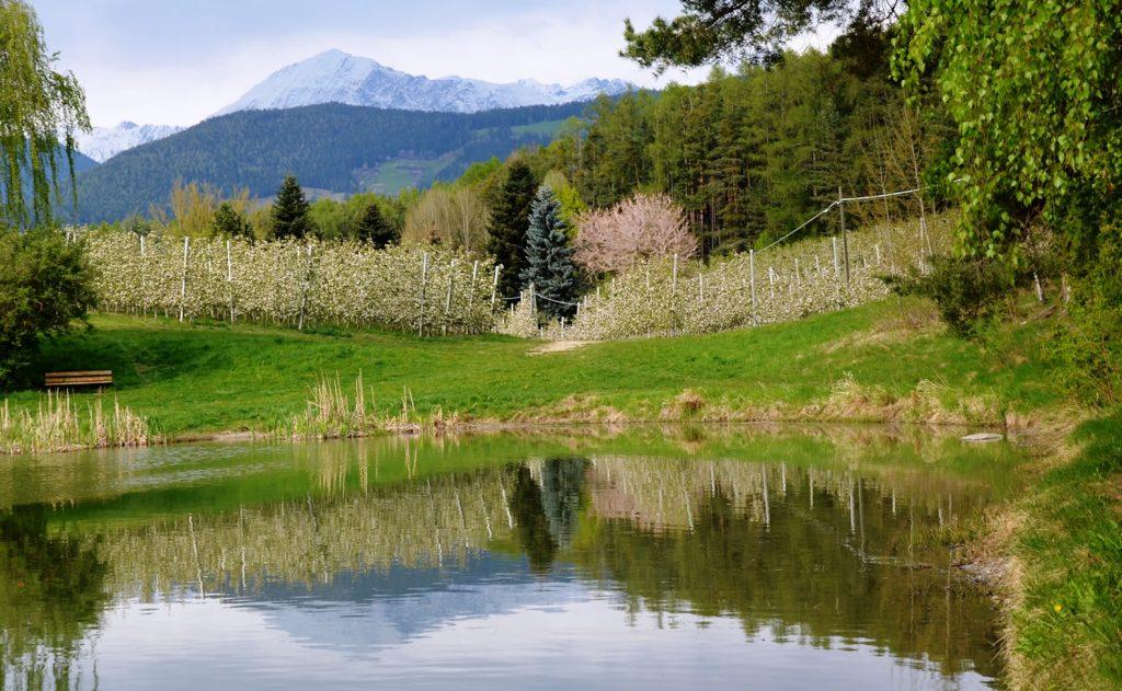 Apfelblüte Südtirol 1