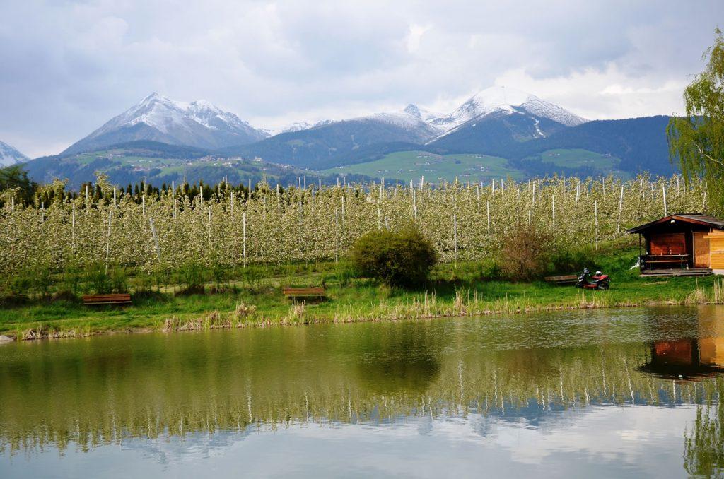 Apfelblüte Südtirol 11