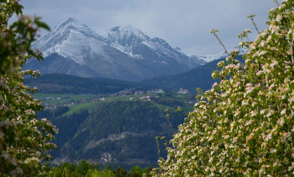 Apfelblüte Südtirol 72