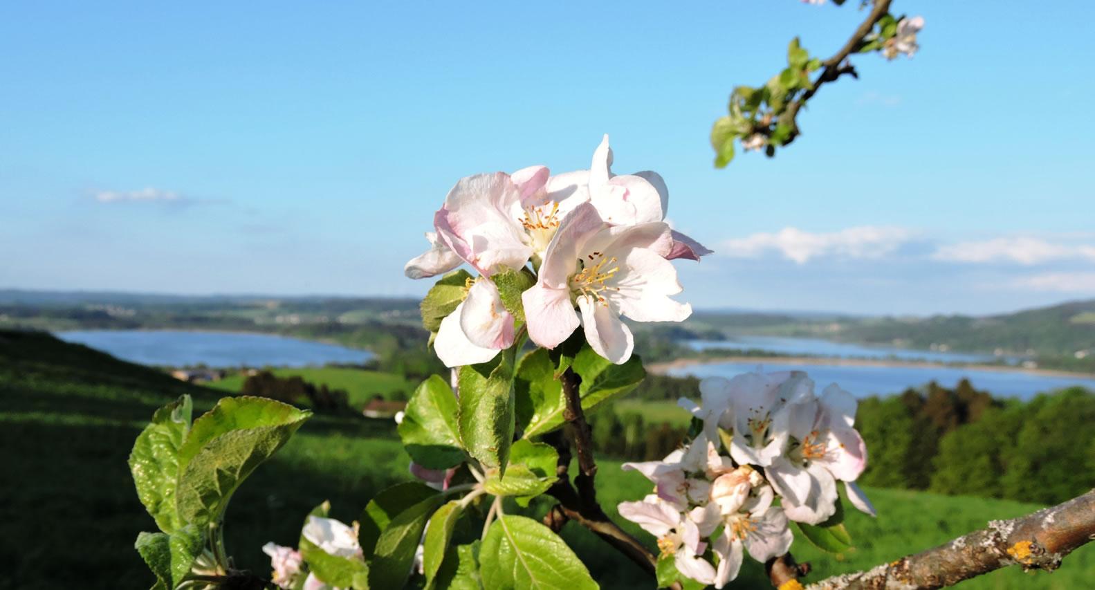 Blütenparadies Bio-Heu-Region 2