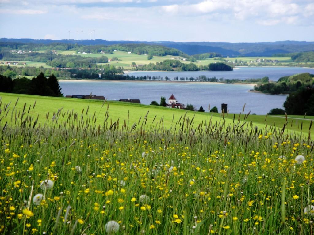 Foto Juli - Bio Heu Region (64) Bild Helmut Mühlbacher